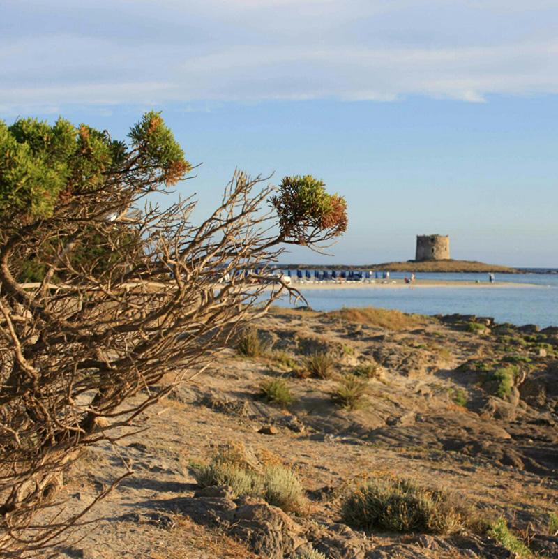 la pelosa sitintino vojagon asinara sardegna alghero mare