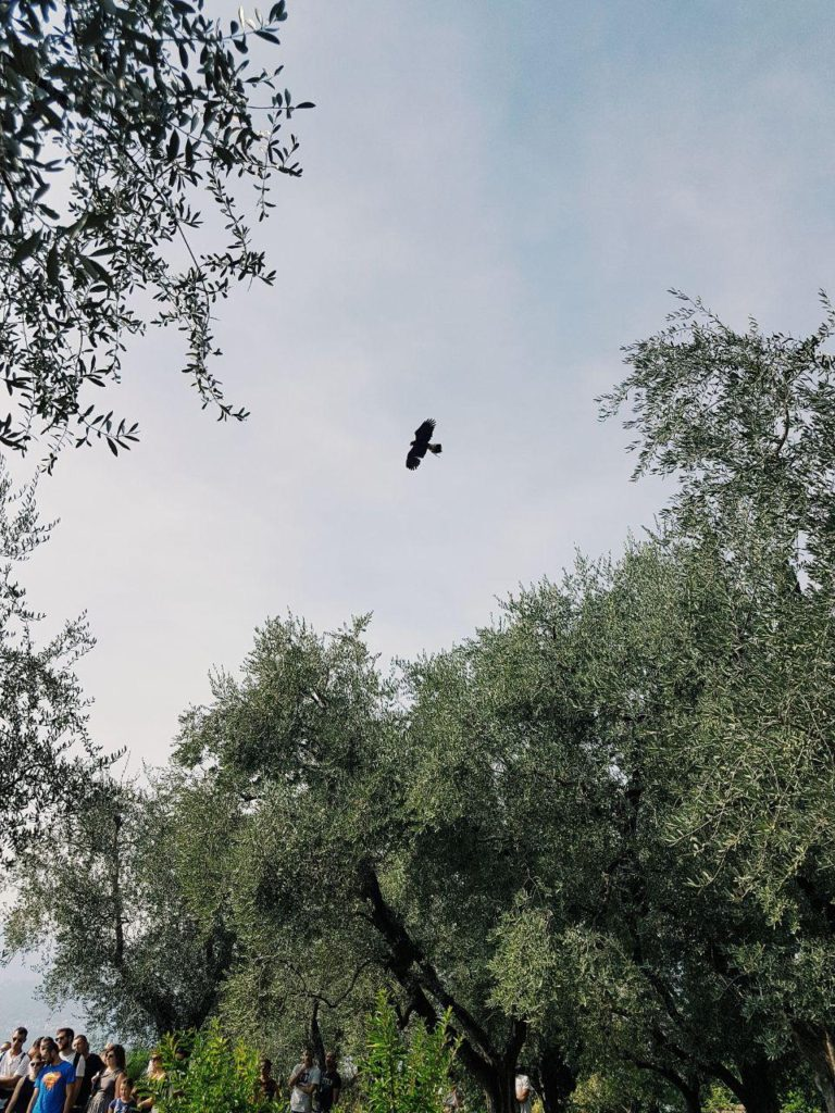 castello di vezio varenna vojagon dimostrazione di falconeria falconiere